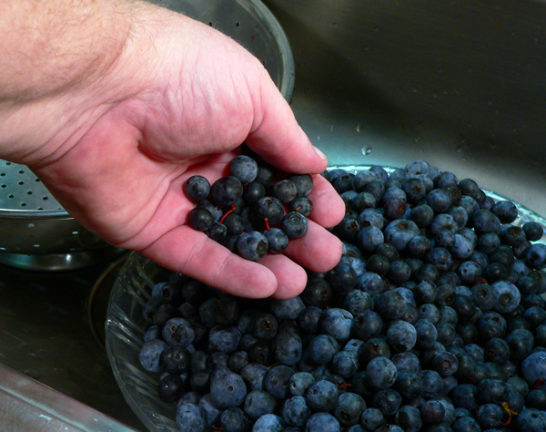 Blueberry Jam, sort the berries