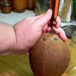 coconut, screwdriver