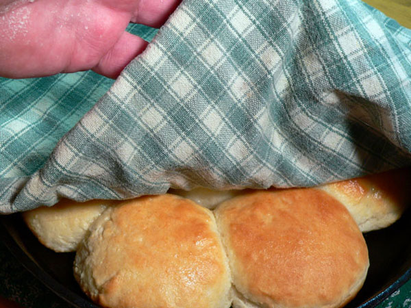 Buttermilk Biscuits, cover with a towel.