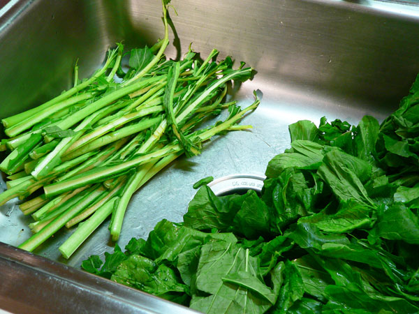 Turnip Greens, remove all stems.