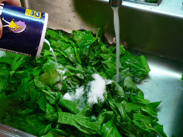 Turnip Greens, add water and salt.