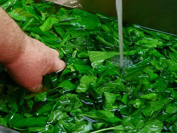Turnip Greens, wash well.