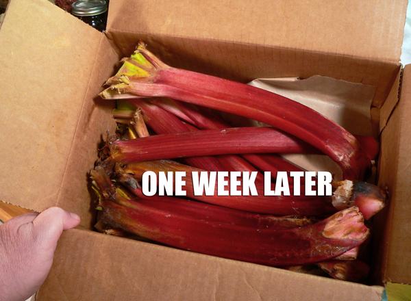 Rhubarb Pie, one week later.