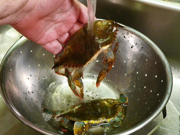 Soft Shell Crab, rinse them gently.
