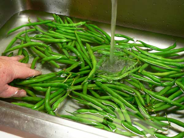 Green Beans and Potatoes, wash the beans.
