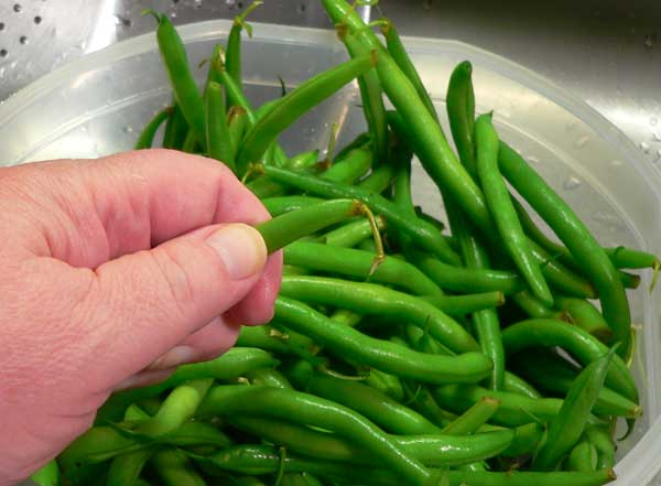 Green Beans and Potatoes, snap off the ends.