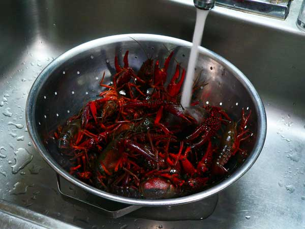Crawfish Boil, rinse under cold running water.