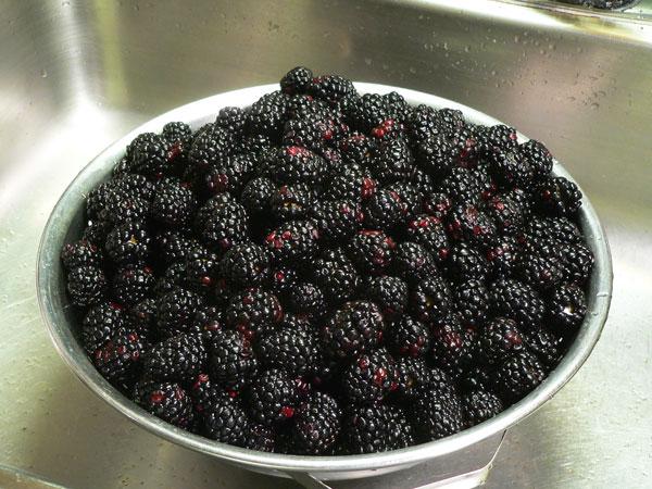 Blackberry Cobbler, rinse the berries.
