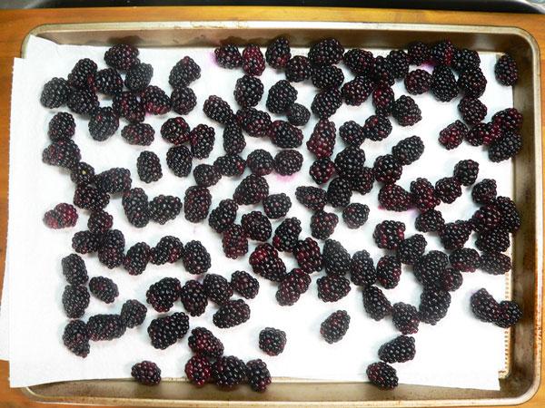 Blackberry Cobbler, dry the berries.